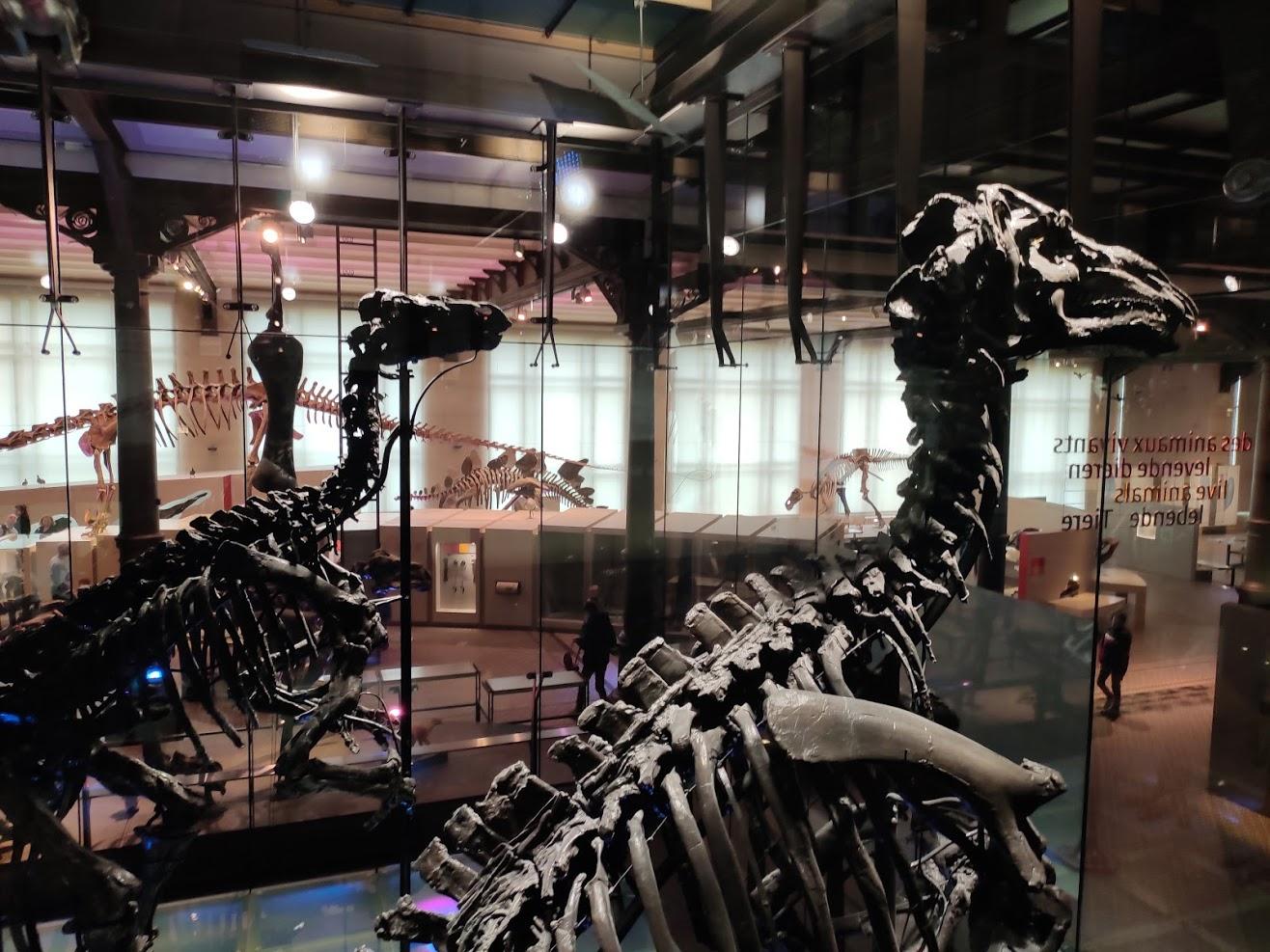 Εκδρομή! Η περιπέτειά μας στο μουσείο Φυσικής Ιστορίας!